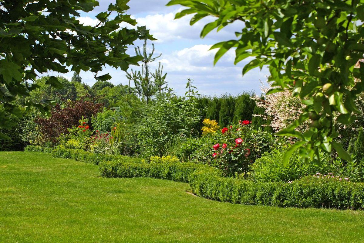 Buchsbaum als Beetumrandung im Garten