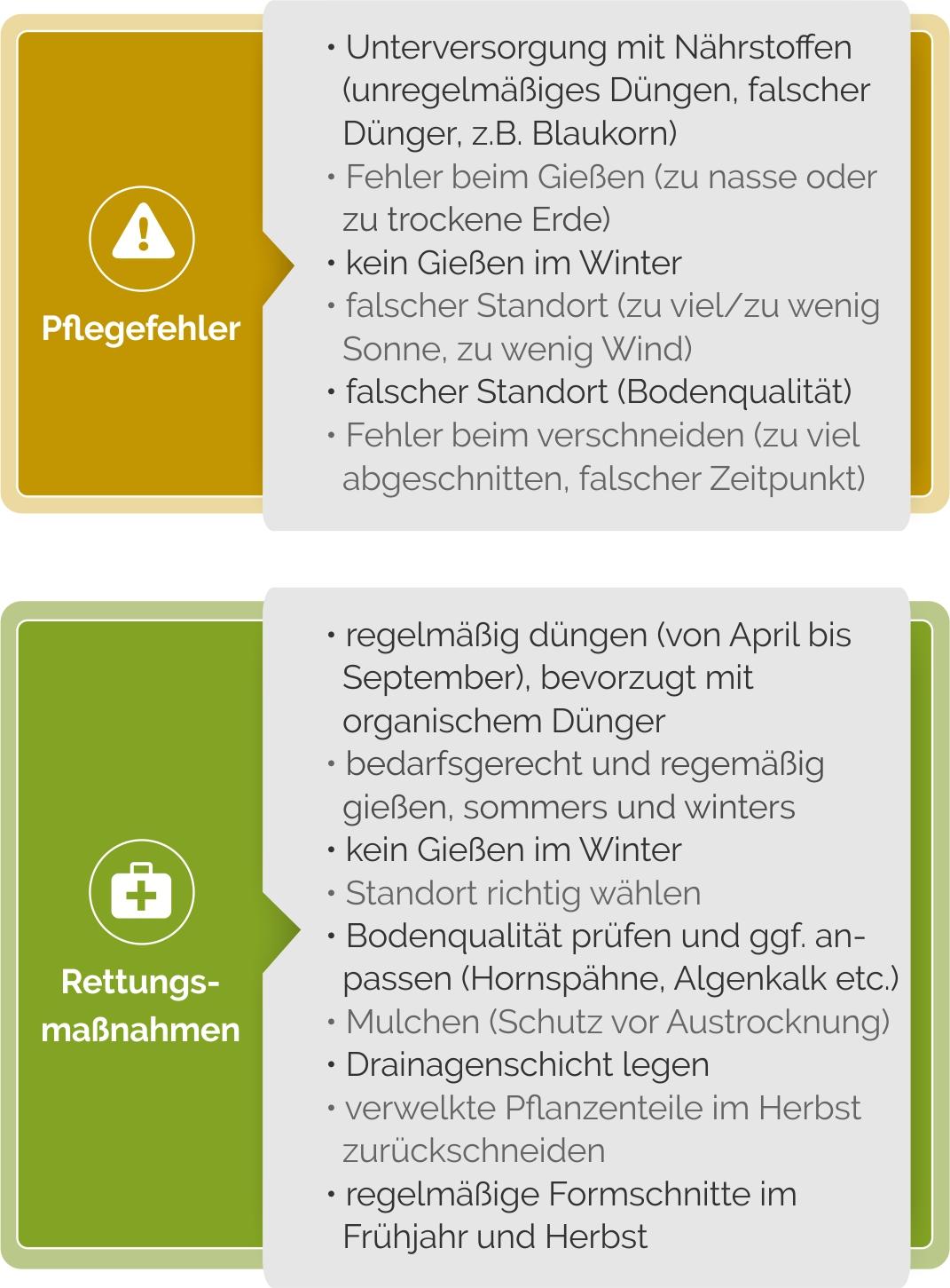 Buchsbaum Pflege-Fehler im Überblick
