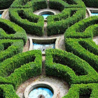 Symmetrische Buchsbaumhecken © Dorota Szymczyk / shutterstock.com