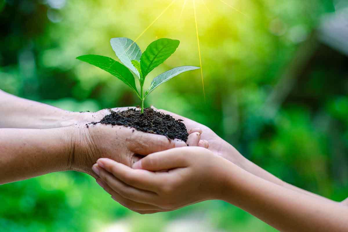 junge Pflanze symbolisiert die Geburt einer neuen Familie, junges Glück nach Geburt