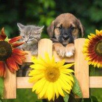 Hund und Katze mit Sonnenblumen