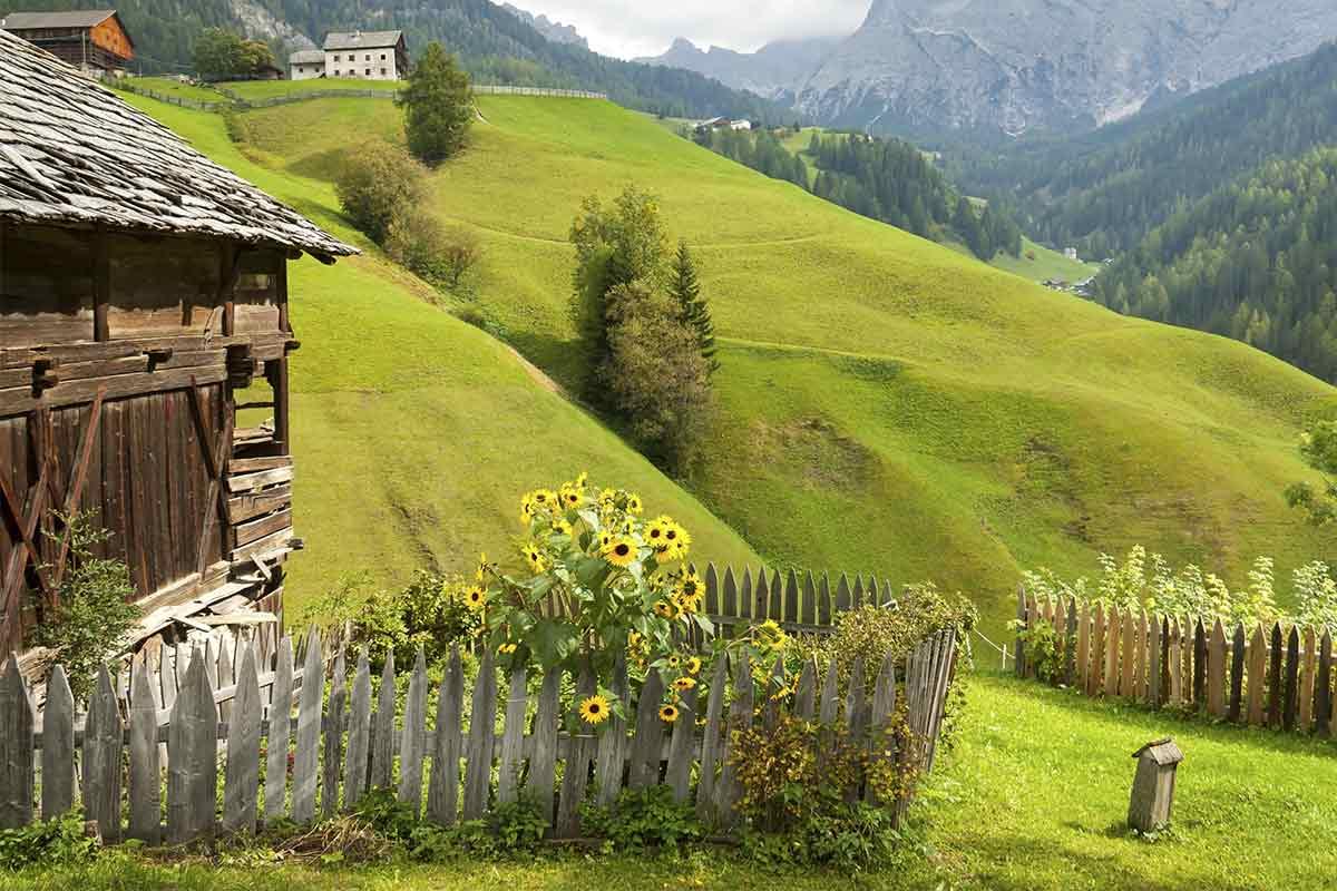 Sonnenblumen an einer Berghütte