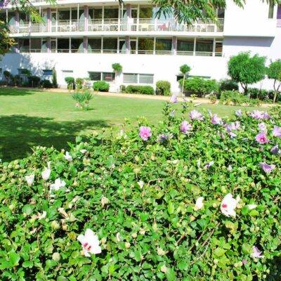 Hibiskushecke an einer Rasenfläche