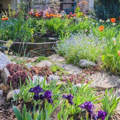 Tulpen an einem Weg und Teich