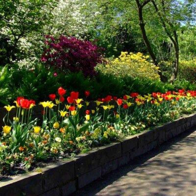 Tulpen säumen eine Straße