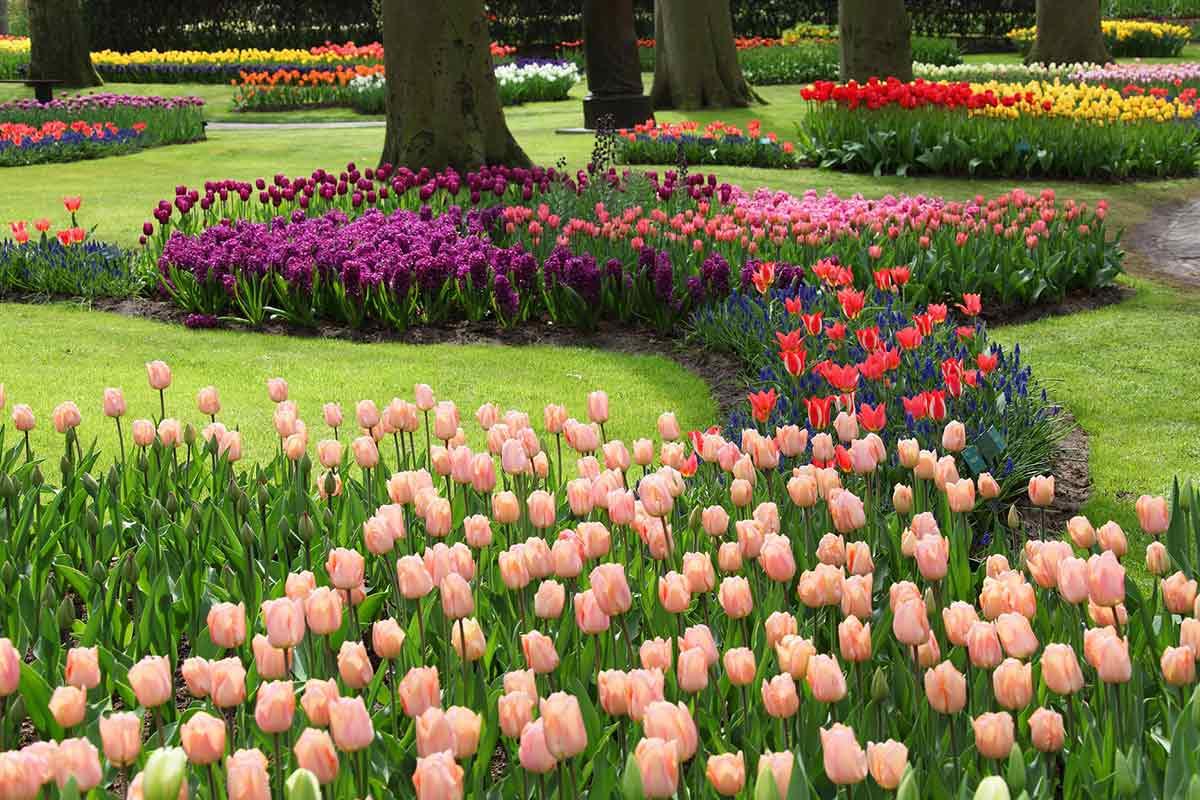 Üppiges, buntes Tulpenbeet