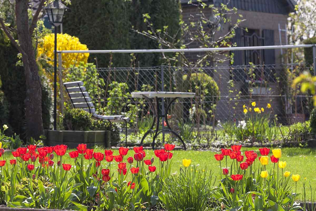Tulpenbeet im Garten