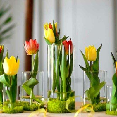 Tulpen in Dekogläsern