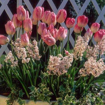 Tulpen mit Hyazinthen