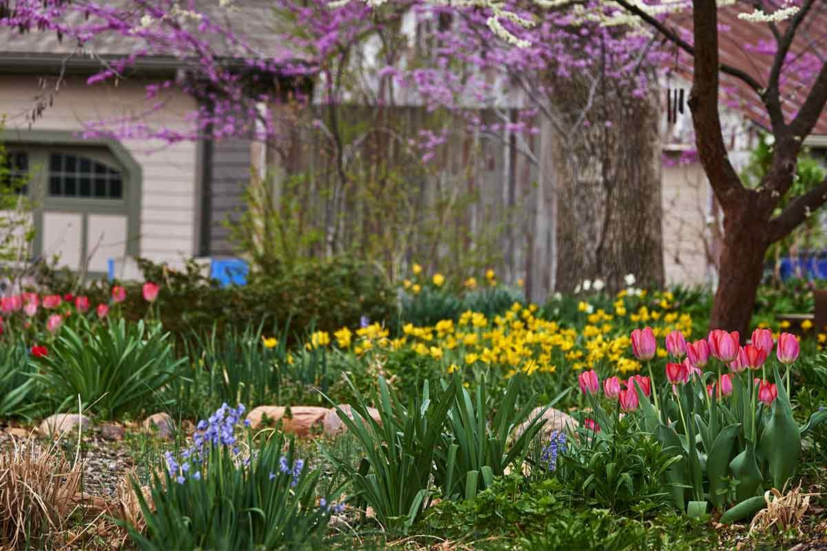 Tulpen in einem frühlingshaften Garten
