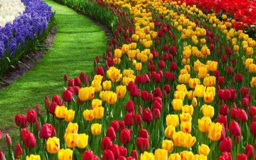 Tulpen & Tulpenzwiebeln – Kauf  Arten  Pflanzzeit  Pflege  Verwendung im Tulpenstrauß & Co.