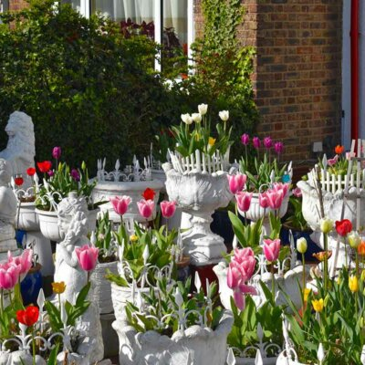 Tulpen im Topfgarten