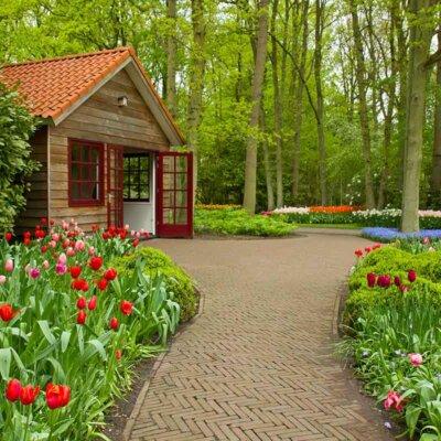 Tulpen an einem Weg