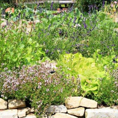 Gemischt bepflanztes Beet mit Salbei