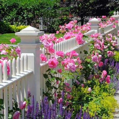 Weißer Zaun mit Rosen und Salbei