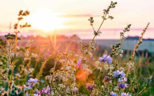 Blumenwiese & Kräuterwiese anlegen – Anleitung  Zeitpunkt zum Säen + Blumenliste