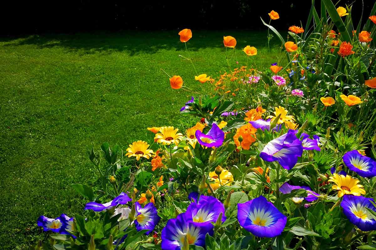 Blaue, gelbe & orangene Blüten mit Rasen