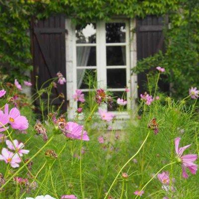 Rosa Blumenwiese vor einem Haus