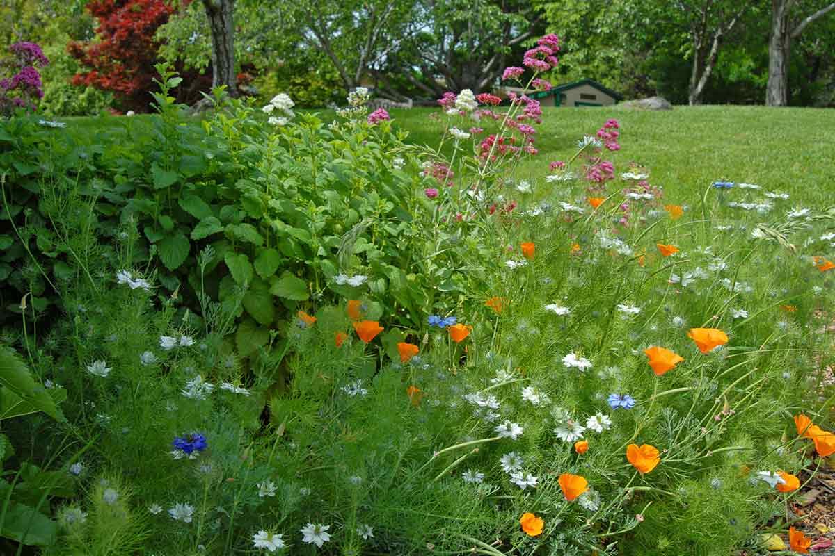 Blumenwiese und Gras neben Haus