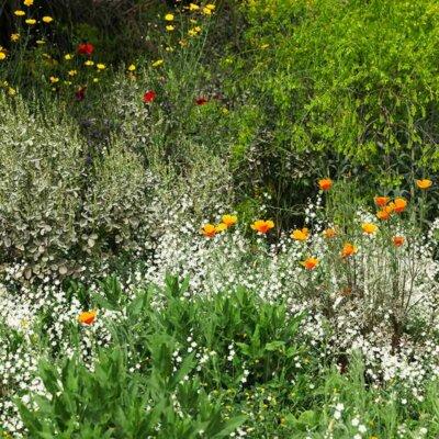 Blumenwiese mit mediterranen Blumen