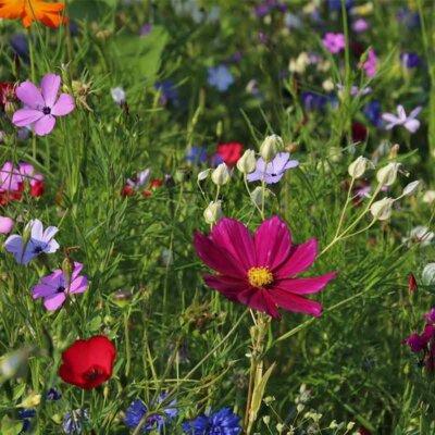 Bunte Blumen in der Blumenwiese