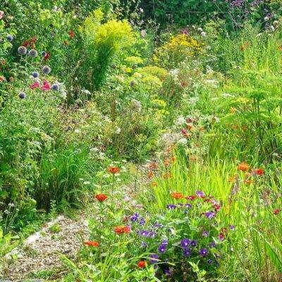 Wilde Blumenwiese an einem schmalen Pfad