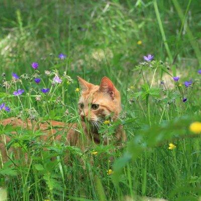 Katze in einer Blumenwiese