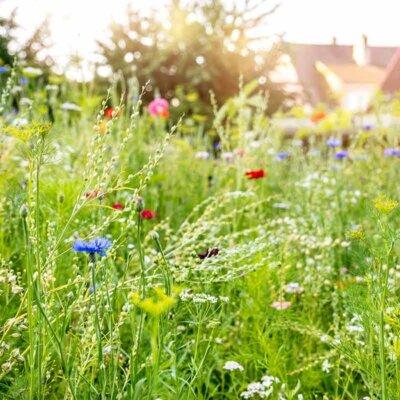 Städtische Gartenanlage mit Blumenwiese