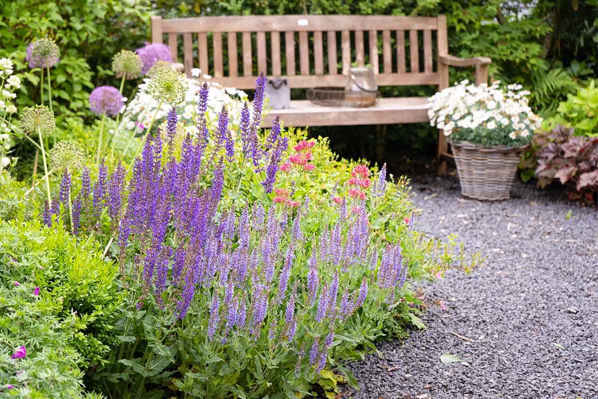 Salbei und andere Blumen mit Bank