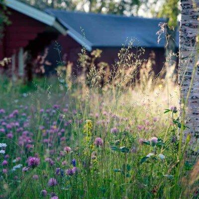 Wildblumen vor einer Hütte
