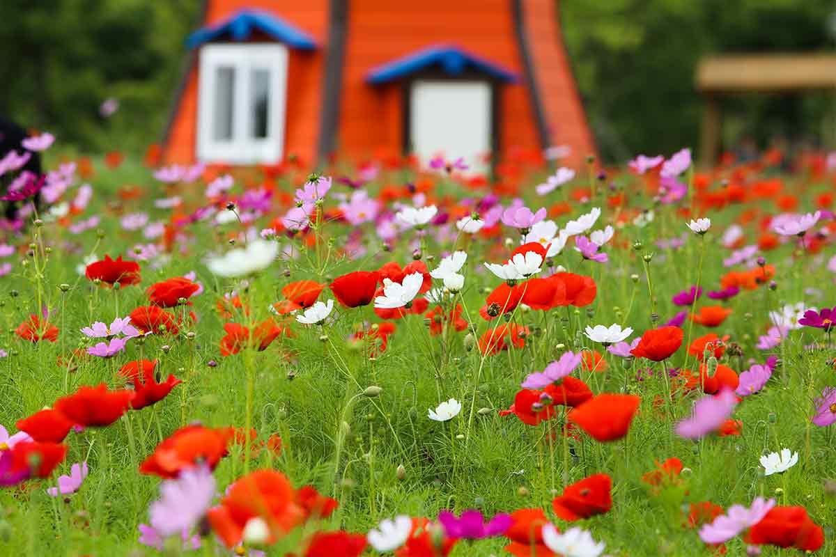 Bunte Wildblumen vor einer Mühle