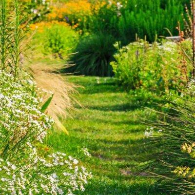 Wildwiese säumt einen Rasenstreifen