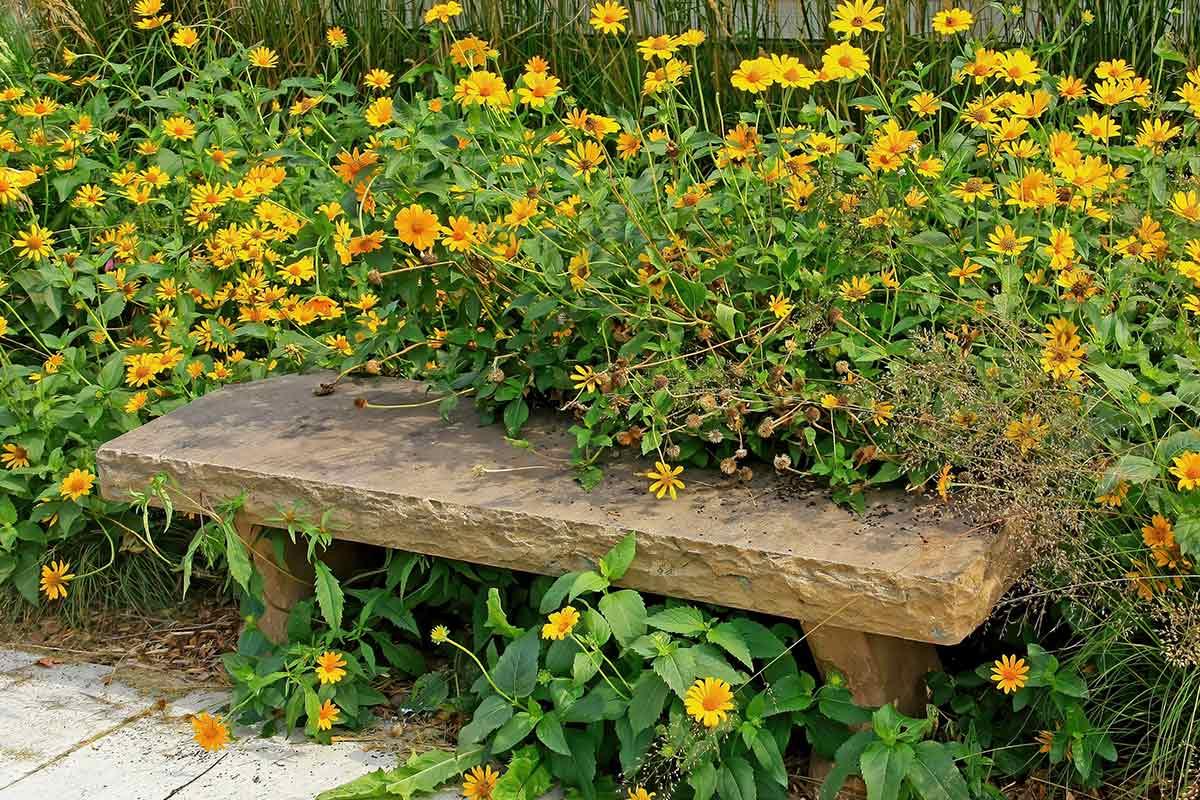 Holzbank mit gelber Wildblumenwiese