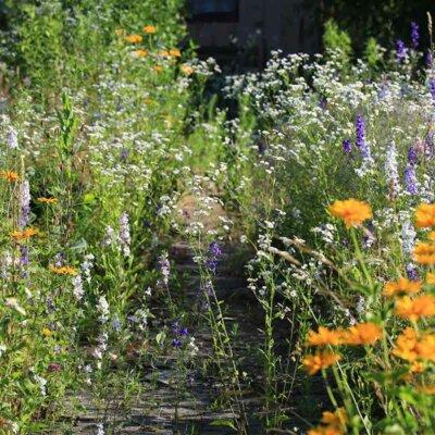Wuchernde Wildblumen und Unkraut
