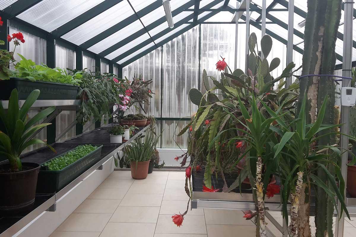 Plexiglas-Gewächshaus von innen
