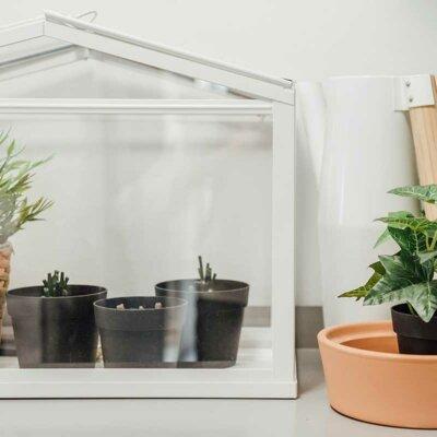 Mini-Gewächshaus als Deko