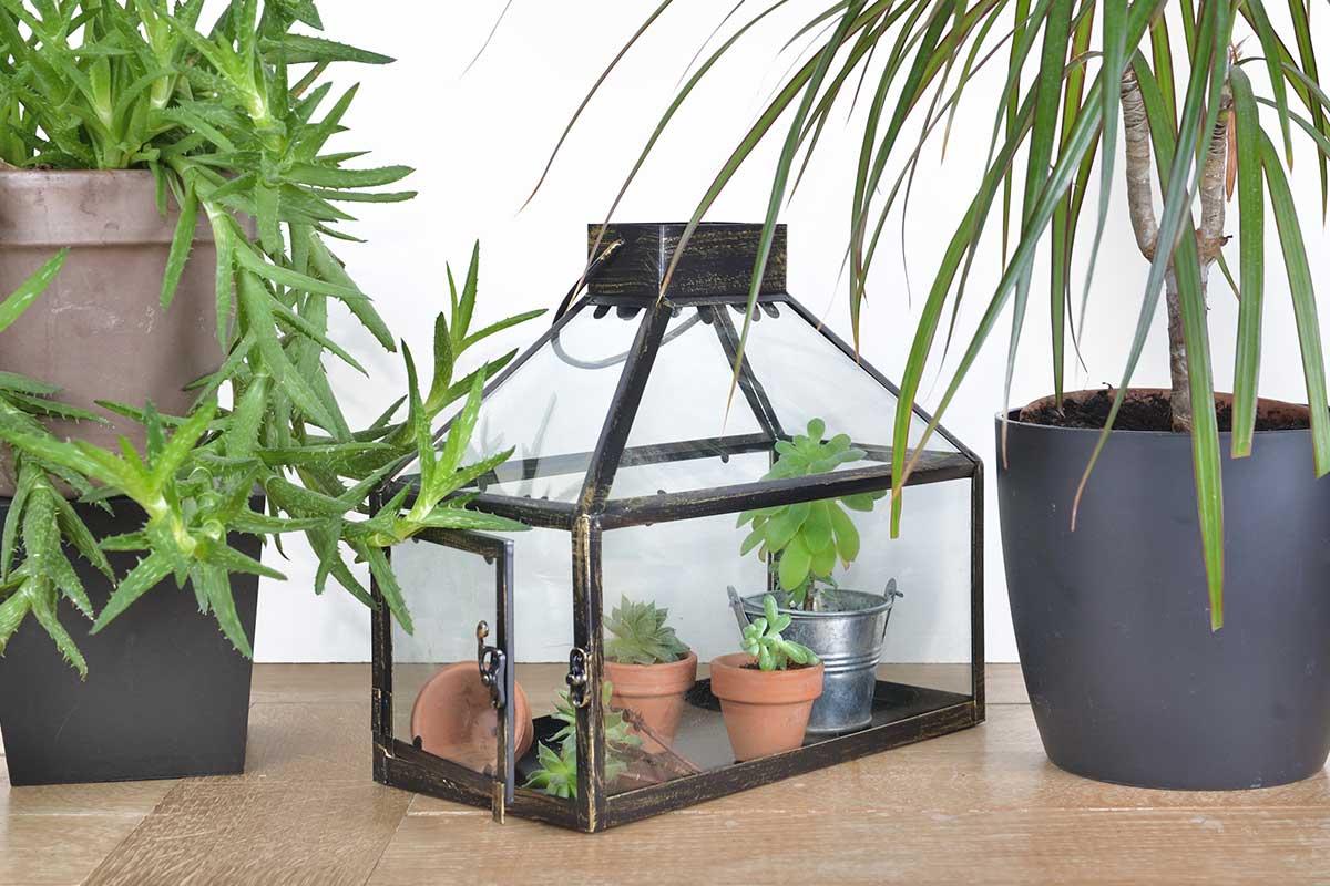 Mini-Gewächshaus mit Topfpflanzen