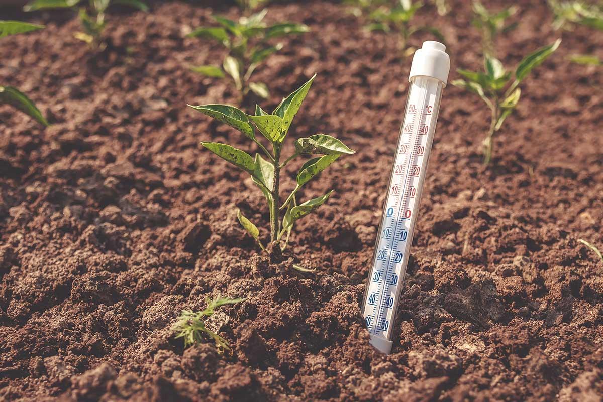Thermometer steckt zwischen Pflanzen