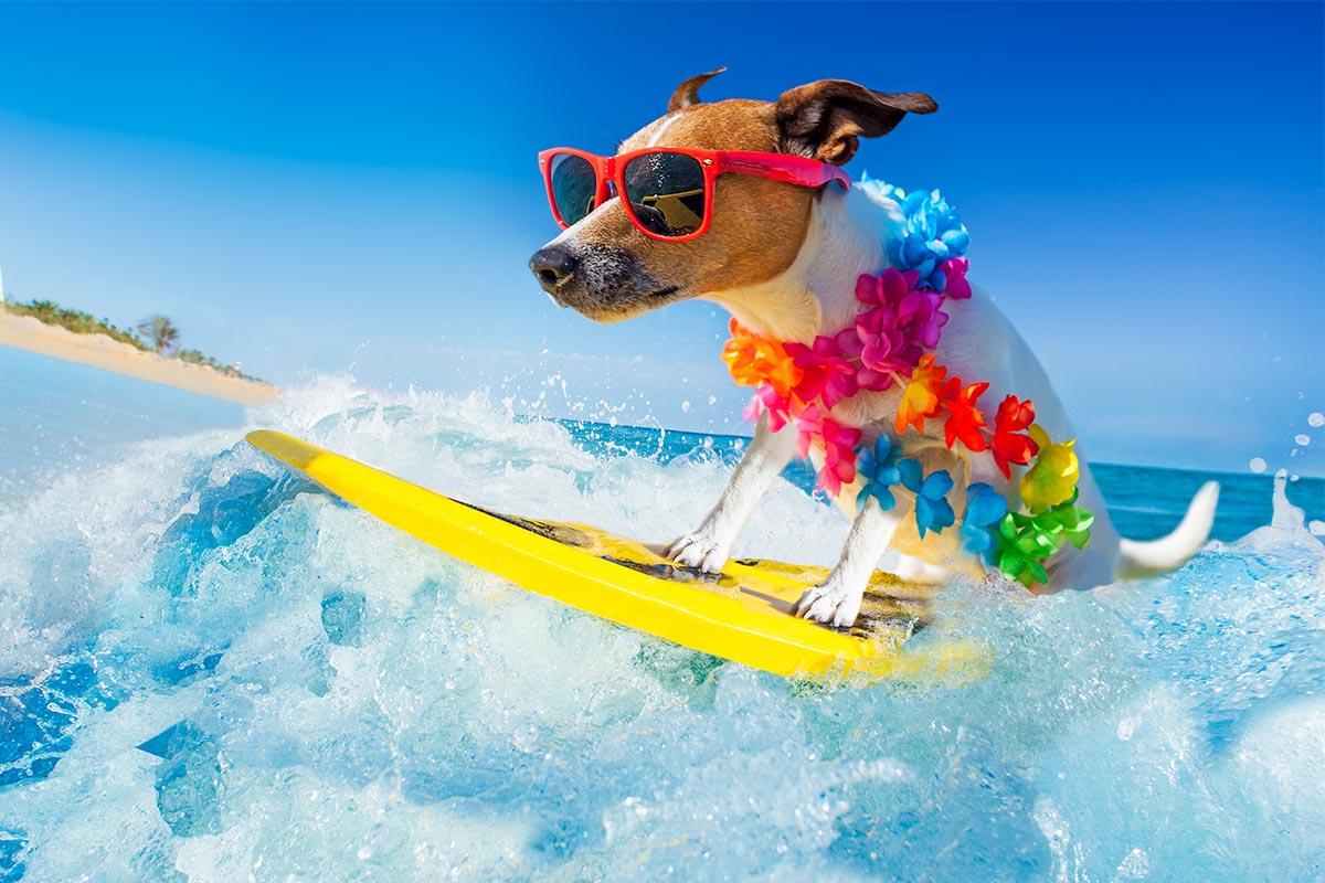 Lustiger Hund surft auf Welle im Meer