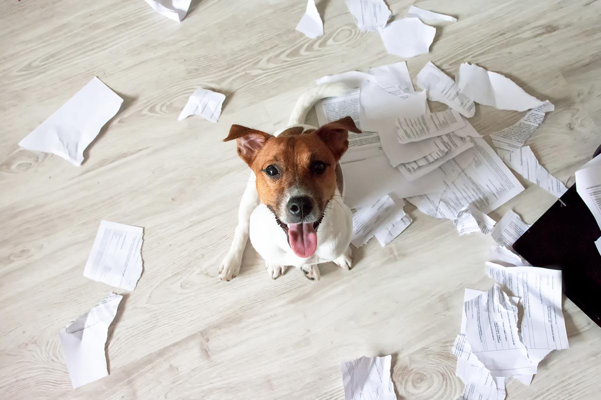 Hund in Wohnung mit zerrissenem Papier