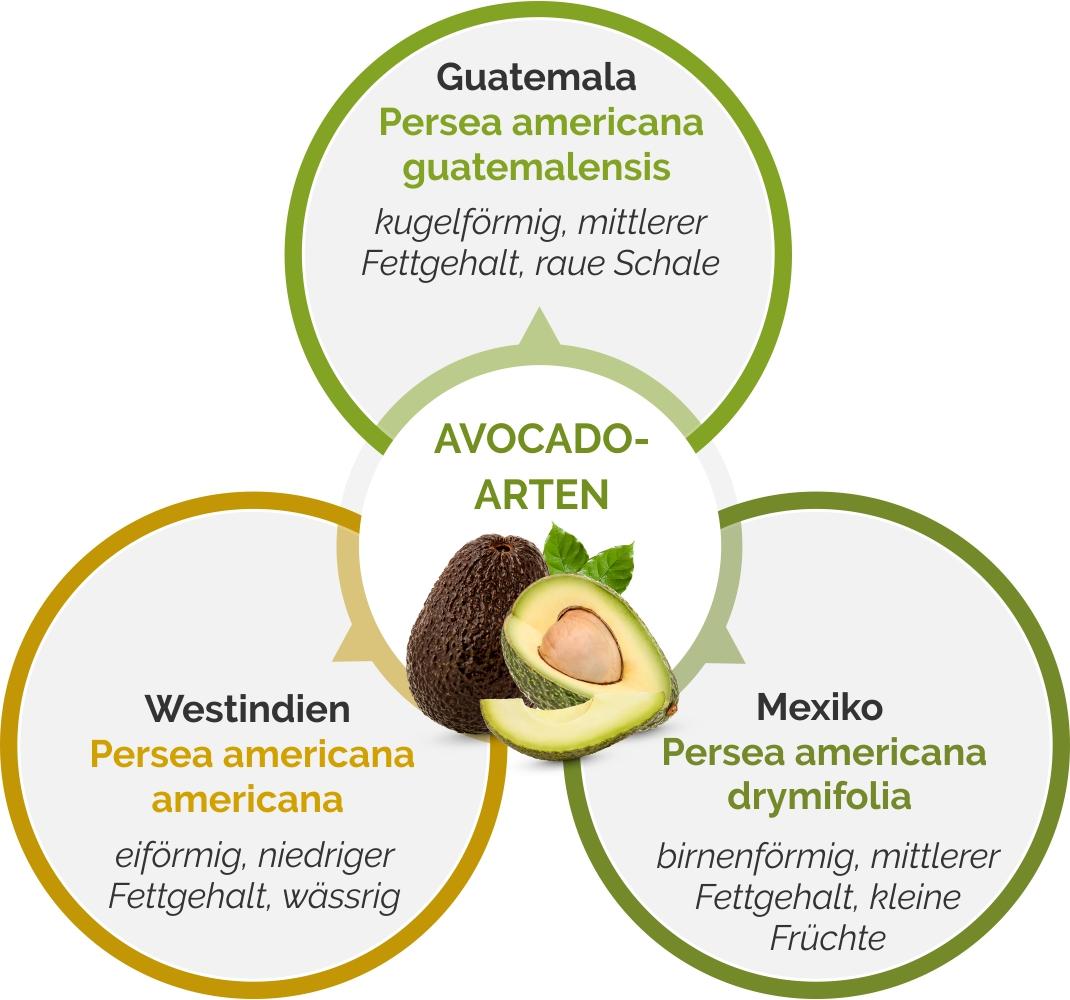 Grafik zu Avocado-Arten