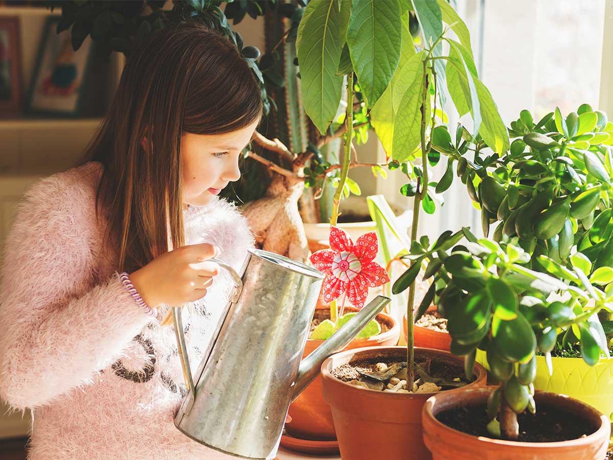 Mädchen gießt Avocado
