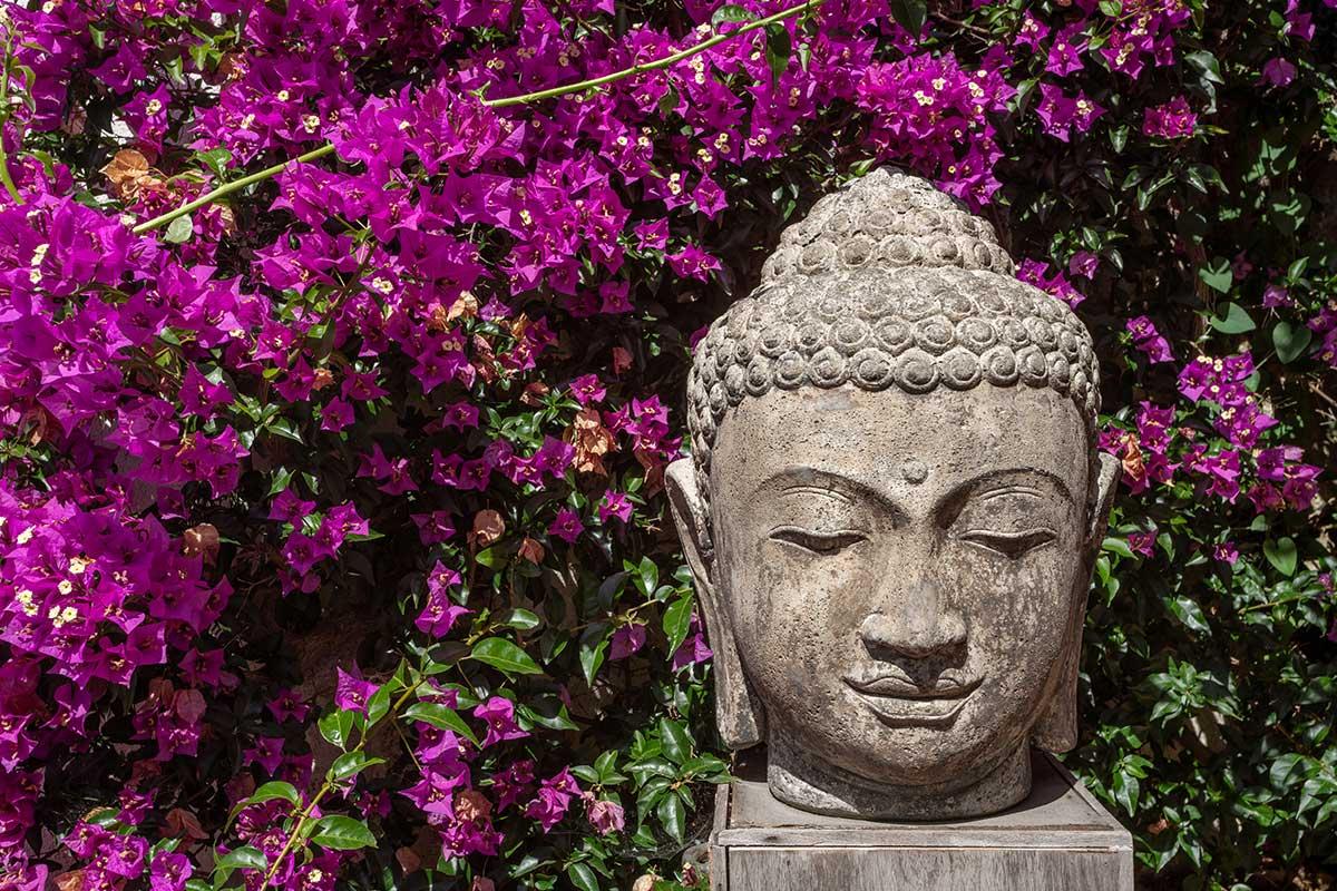 Clematis mit Buddha-Statue