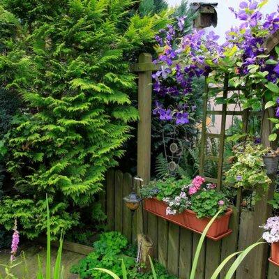 Gartendeko mit lila Clematis