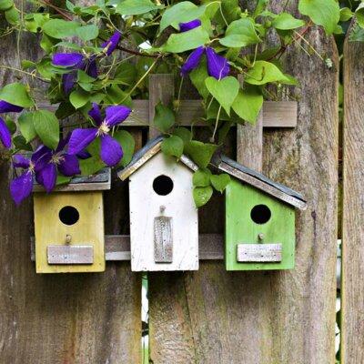 Bunte Vogelhäuschen mit Clematisranke