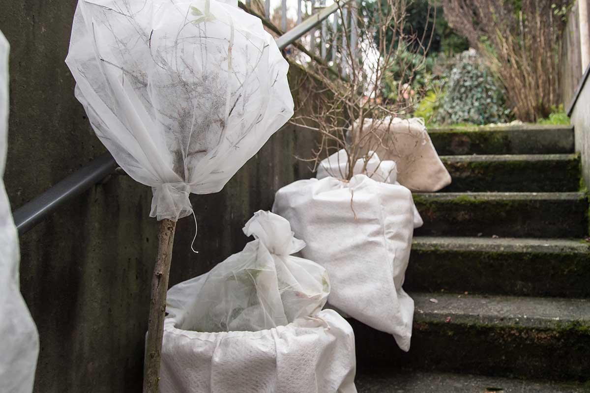 Pflanztöpfe mit Vlies